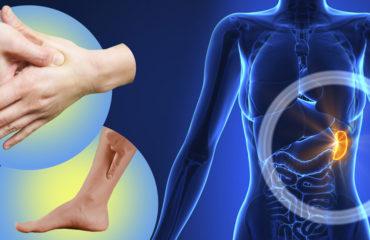 Функции селезенки в организме человека.