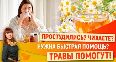 Профилактика, быстрая помощь и лечение простуды и ОРВИ травами