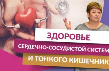 Здоровье сердечно-сосудистой системы и тонкого кишечника