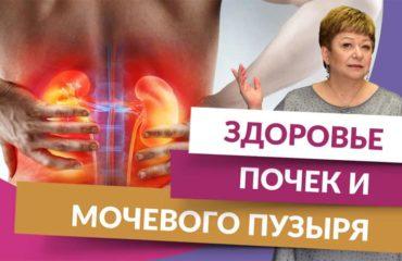 Здоровье почек и мочевого пузыря